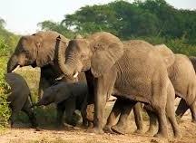 kidepo national park-uganda