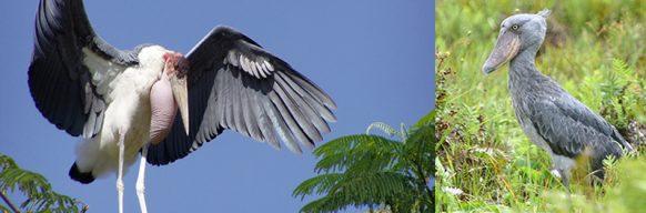 lake-mburo-birding-safari uganda