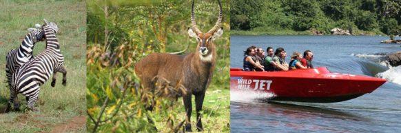lake-mburo-uganda-short-safari
