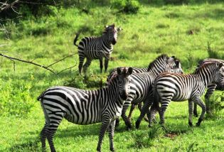 Lake Mburo National Park, Uganda wildlife tour safari in Lake Mburo National Park