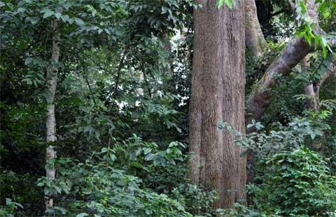 mabira forest-uganda