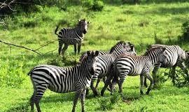 mburo national park