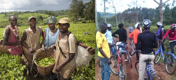 mpanga-tea-estate-cycling