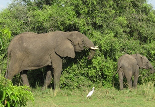 wildlife murchison-falls-