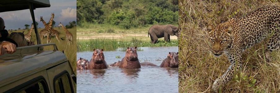 murchison-falls-wildlife