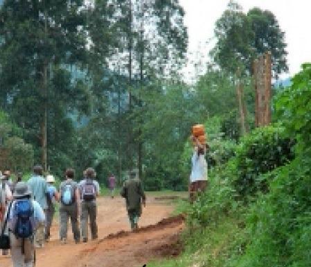 nature walks - uganda