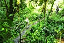 nature walks Bwindi