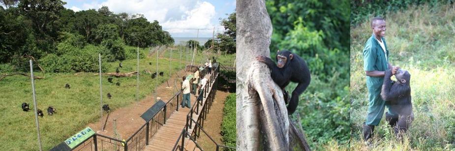 ngamba-island-chimpanzee-tour
