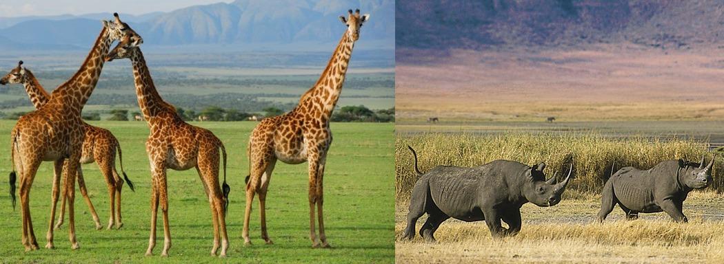 ngorongoro-gamedrive-tanzania-safaris