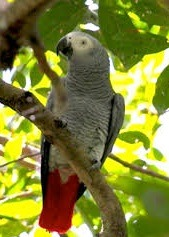 Birding in Lake Mburo National Park