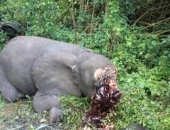 poaching