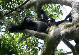 primate -kibale image