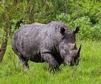 ziwa rhinos-uganda