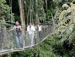 canopy walk nyumwe forest national park