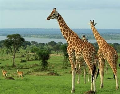 Wildlife akagera national park Rwanda