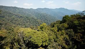rwanda -nyugwe forest