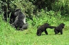 rwandacgorilla safari tours