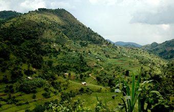 18 days comprehensive safari in Uganda tour