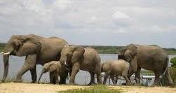 safari life in uganda