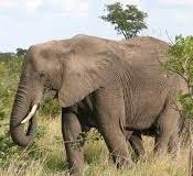 safaris to uganda