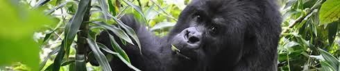 tourist attractions in Rwanda