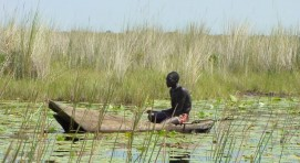 Uganda swamp fishing