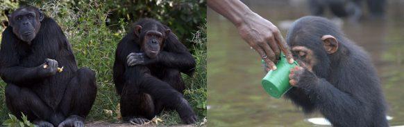 Sweetwater's Chimpanzee SanctuarySweetwater's Chimpanzee Sanctuary