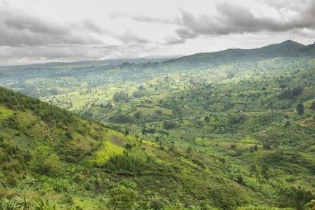 forest in uganda