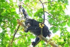 uganda safari-attractions