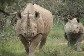 uganda safari visit