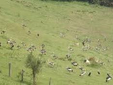 uganda safaris image