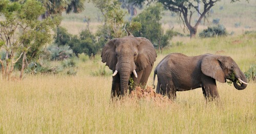 uganda wildlife attractions