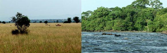 vegetation-virunga-np-congo tour