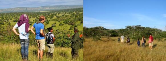 walking-safari-mburo uganda safari