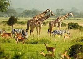 wild life safaris in uganda