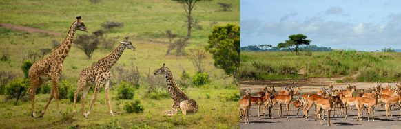 wildlife-at-arusha-national-park tanzania safari tour