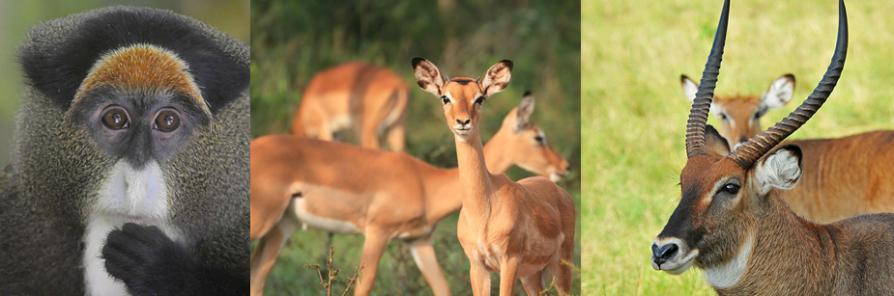 wildlife-at-kuhugye