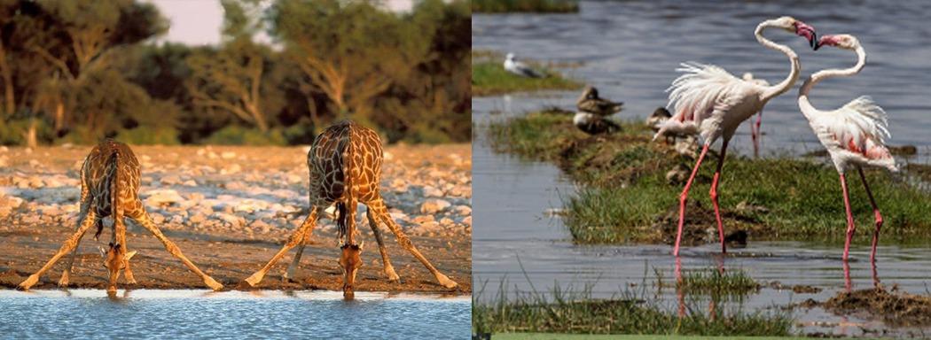 wildlife-at-lake-manayara-np-tanzania-safaris