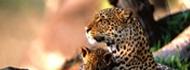 wildlife-murchison-falls