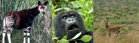 wildlife-virunga-np-congo