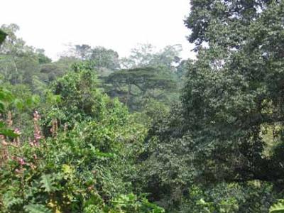 zina forest-image