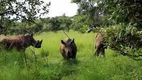 ziwa-rhino-sactuary