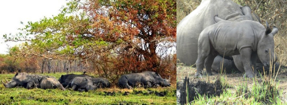 ziwa-rhino-sanctuary uganda safari