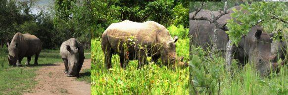 Wildlife & Primates trekking Uganda Safari 9 days uganda tour