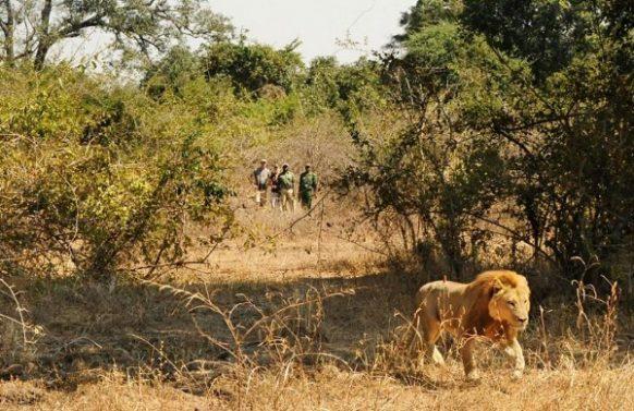 10 Days Safari in Zambia to Lusaka
