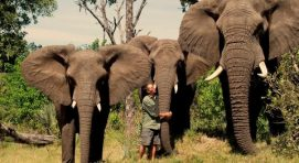 12 Days Best of Botswana Camping Safari Adventure