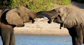 12 Days Luxury Fly in Botswana Safari