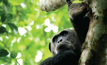 12 Days Uganda Rwanda Gorilla, Wildlife & Culture Group Safari