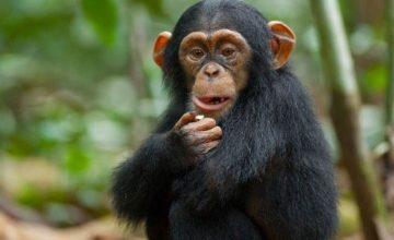 2 Days Chimpanzee Safari in Rwanda to Nyungwe Forest National Park