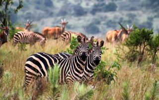 2 Days Wildlife Safari in Rwanda Akagera National Park